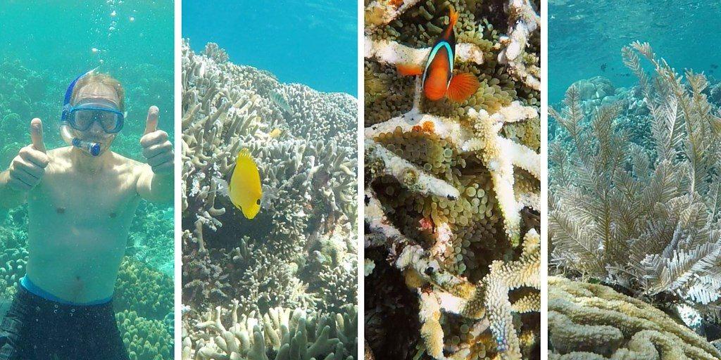 bunaken underwater snorkeling