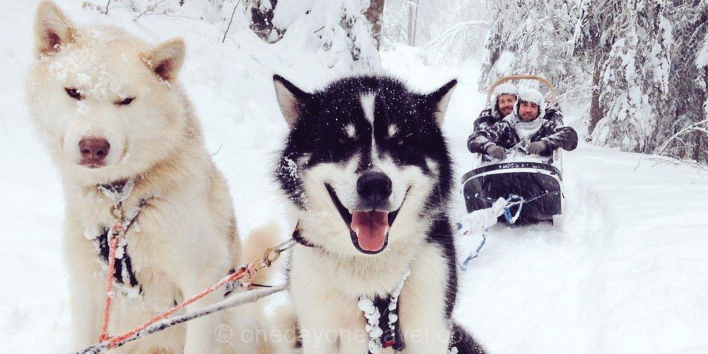 chien de traineau giron foret neige