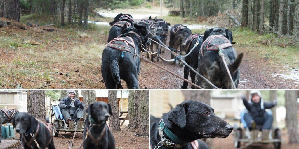 chien traineau pyrenees catalanes