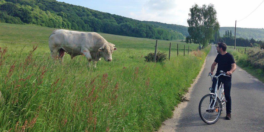marais vernier vélo taureau Franck
