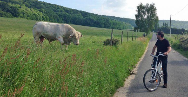 Photo of Week-end au vert dans le Marais Vernier dans l'Eure en Normandie