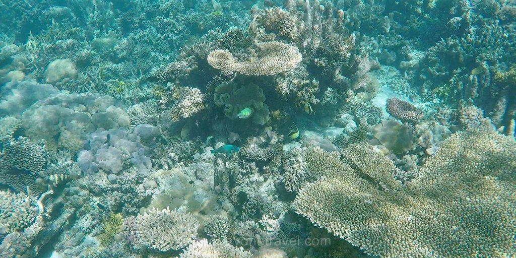 reef5 snorkeling ile togian