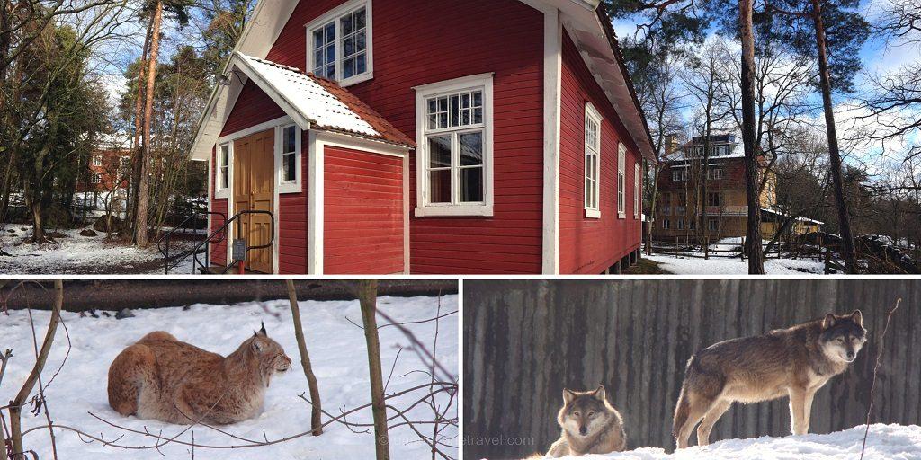 skansen stockholm loup lynx neige new