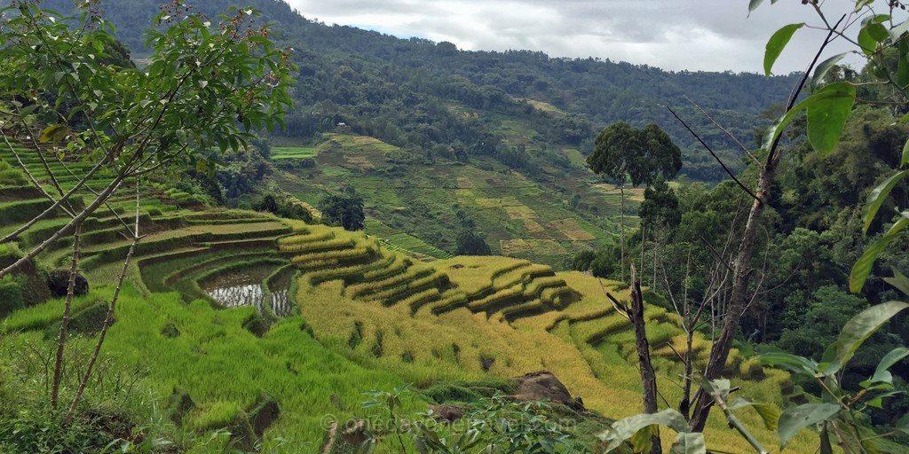 trek pays Toraja riziere Sulawesi Célèbes