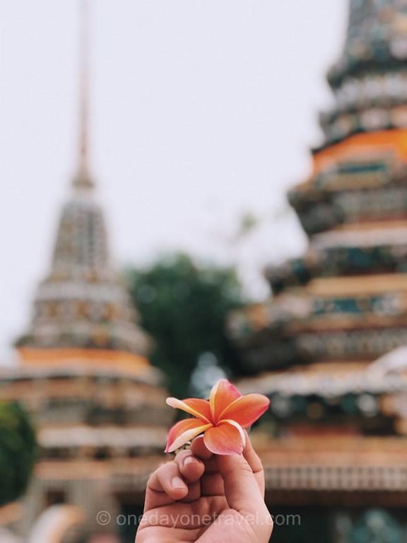Bangkok Wat Pho fleur frangipanier