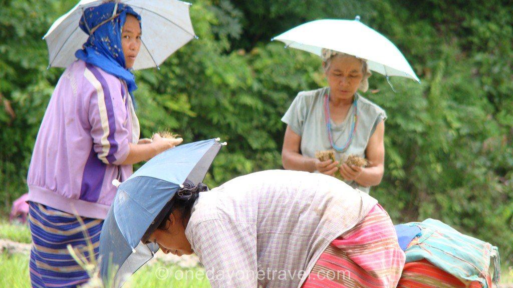 Chiang Mai Trek rizière