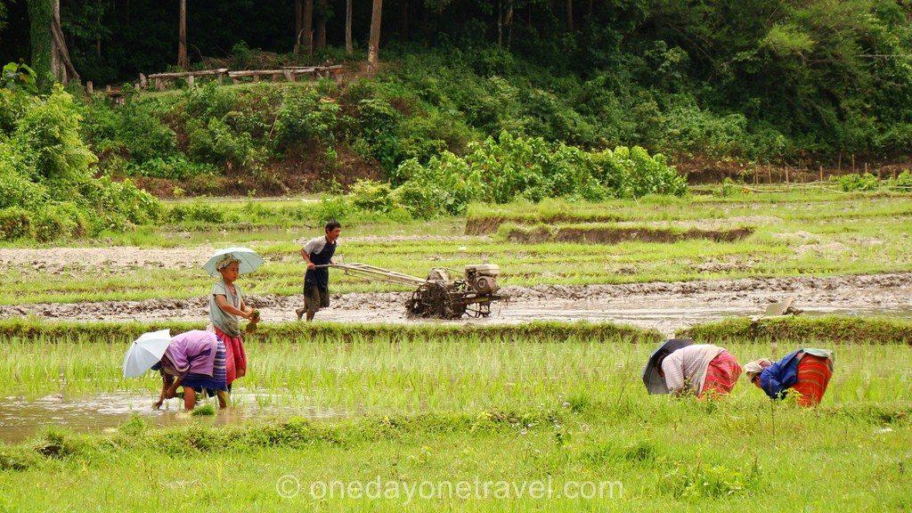 Chiang Mai Trek rizière Thaïlande