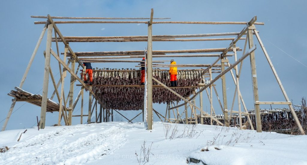 Norvège du Nord îles Lofoten poisson