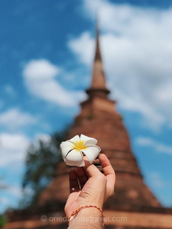 Sukhothaï Thaïlande fleur frangipanier pagode