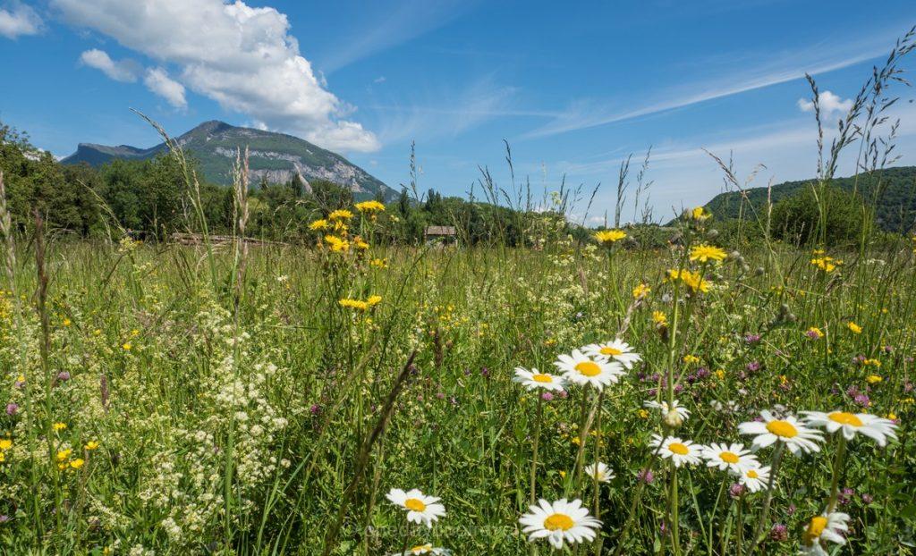 ViaRhona fleur et grand colombier