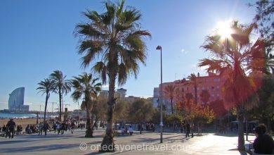 Visite de Barceloneta plage palmier