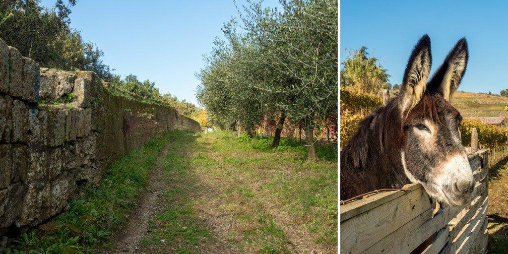 Visiter Naples et ses vignobles