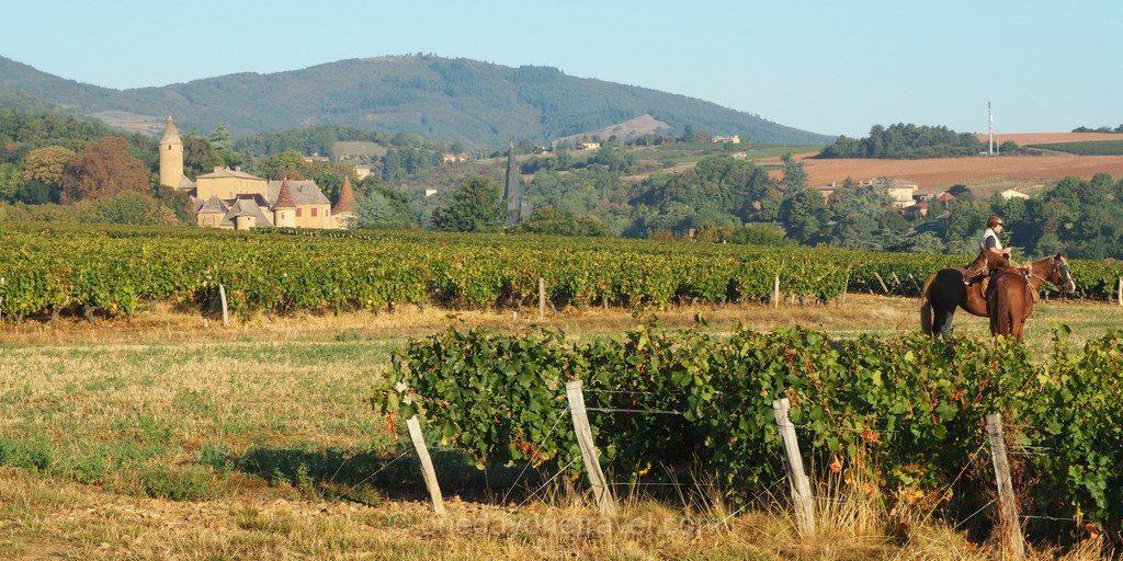 cheval aventure vignes beaujolais