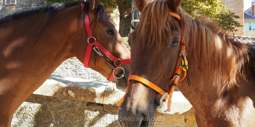 cheval d'aventure chevaux