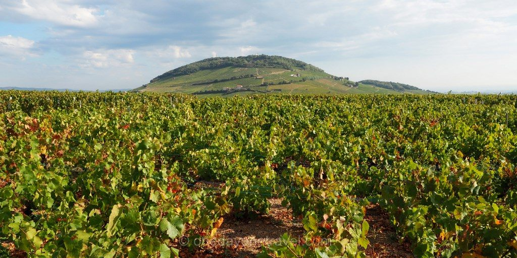 mont brouilly vignobles
