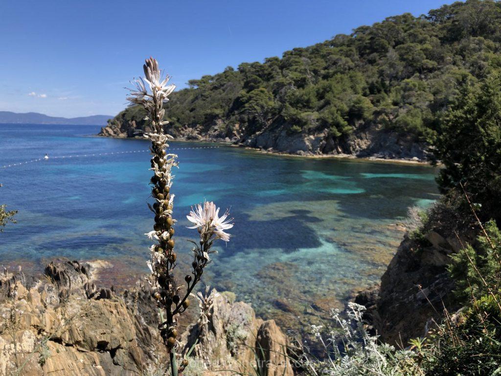 îles Hyères Port Cros réserve naturelle