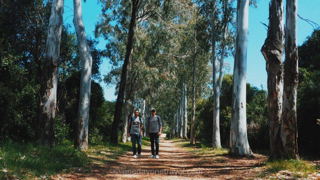 Road trip dans le sud de la France Ile Sainte Marguerite allée Eucalyptus
