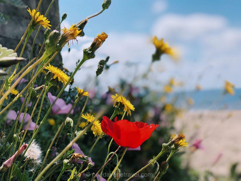 Road trip dans le sud de la France Ile Sainte Marguerite fleurs