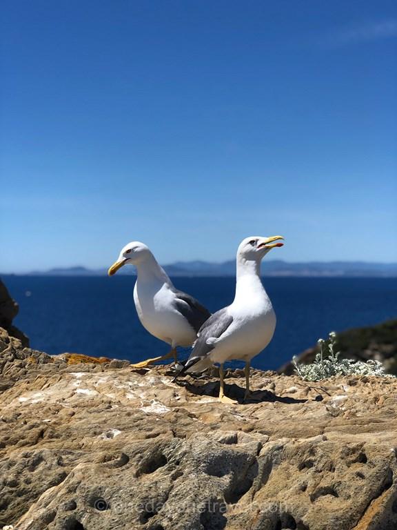 mouettes Port-Cros