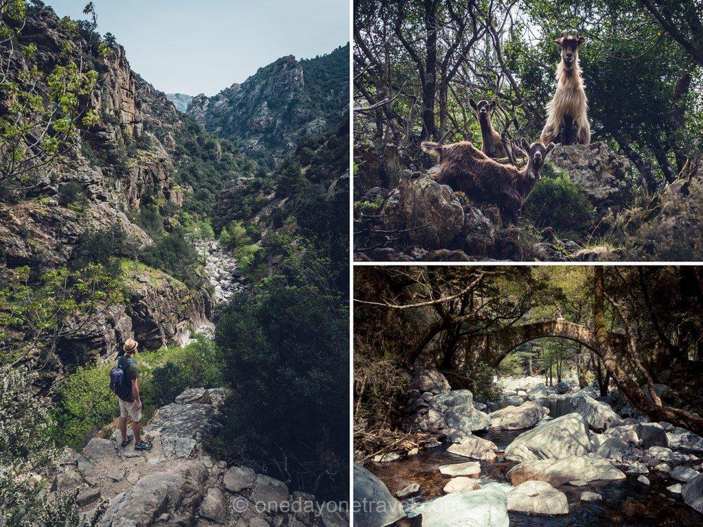 Début de la randonnée le long des gorges de Spelunca en Ouest Corsica