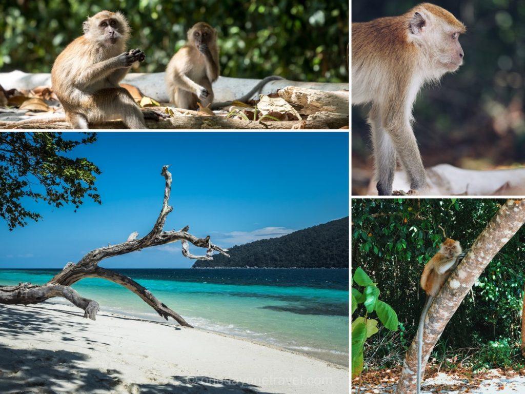 Koh Riwi Island Hopping singes blog voyage