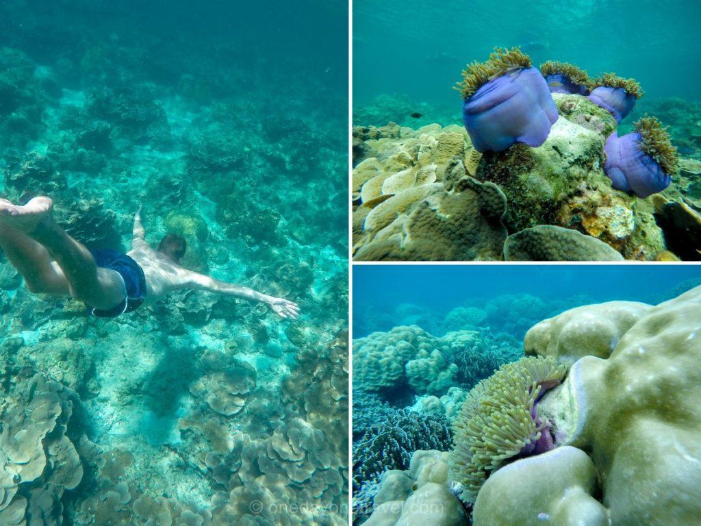 Koh Lipe snorkelling apnée fond sous marin Thailande