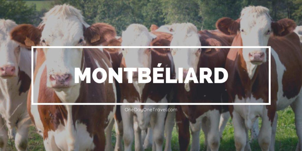 Pays de Montbéliard - Vaches montbéliardes