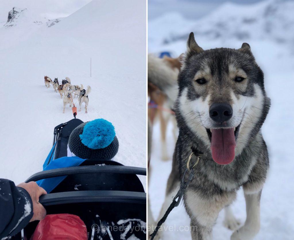 Balade en traîneau à chiens en hiver à Orcières