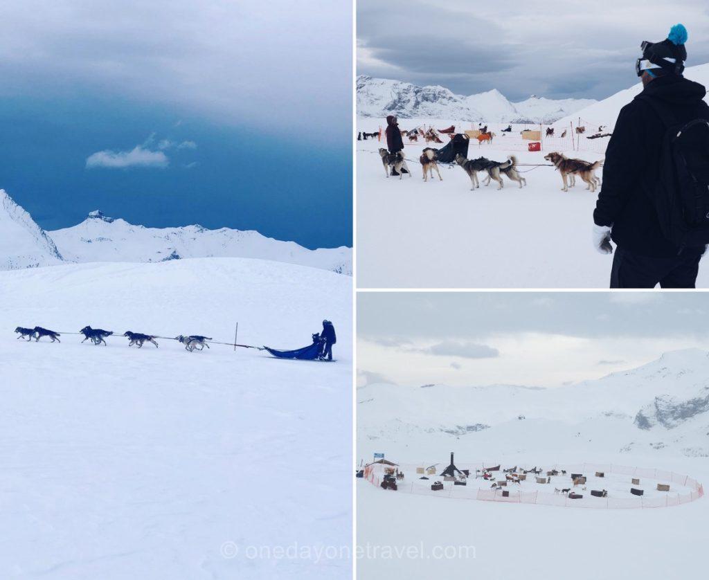 Activité de sport d'hiver : Traîneau à chiens à Orcières