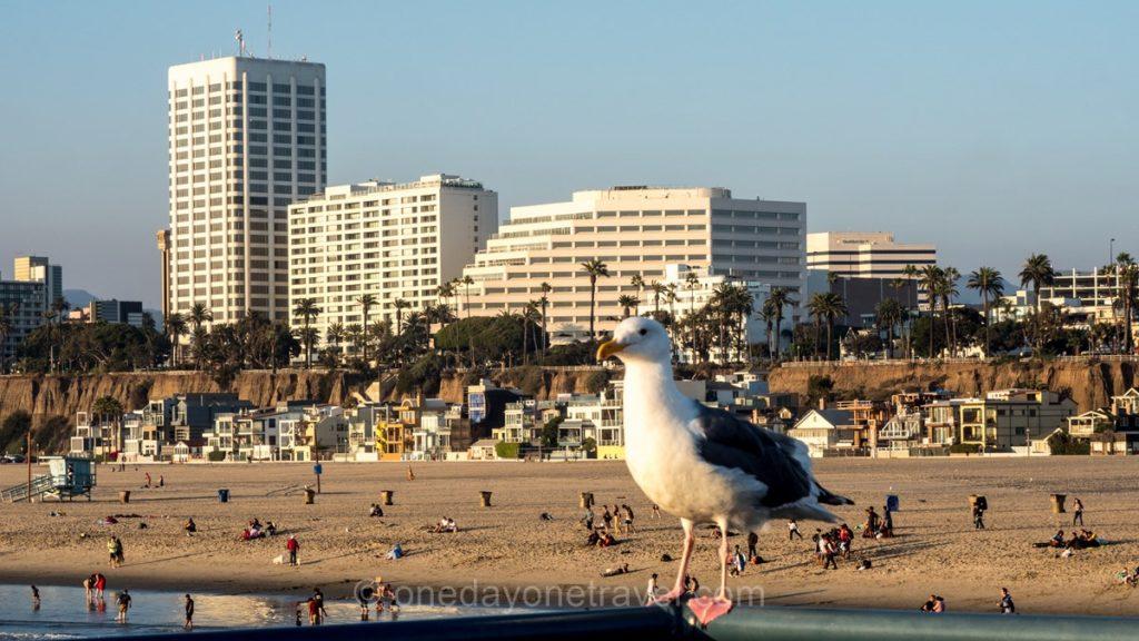 Mouette à Santa Monica et vue sur la plage de Los Angeles