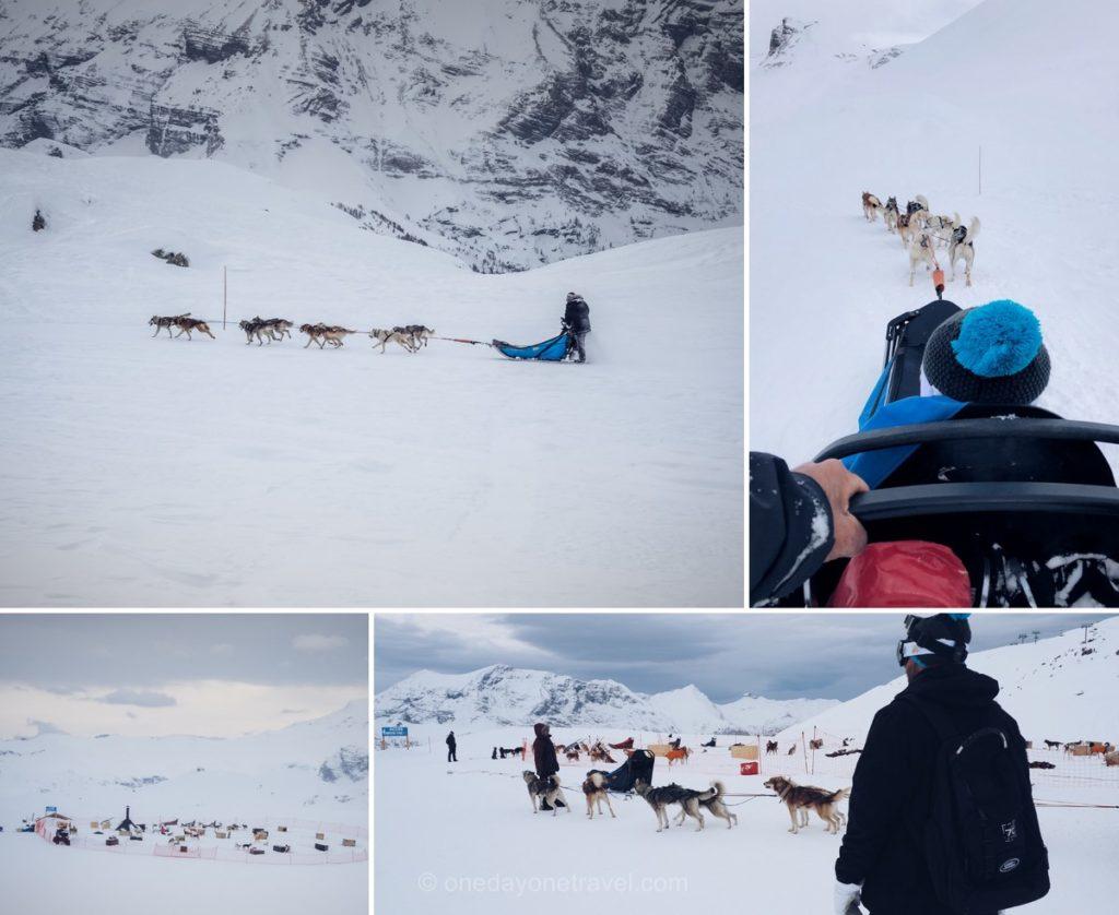Traîneau à chiens à Orcières sur le plateau de Rocherousse