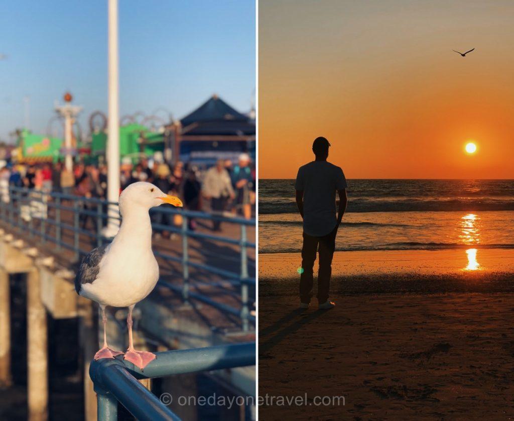 Santa Monica - Mouette et coucher de soleil
