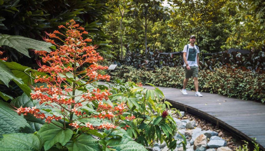 Singapour Jardin botanique Richard