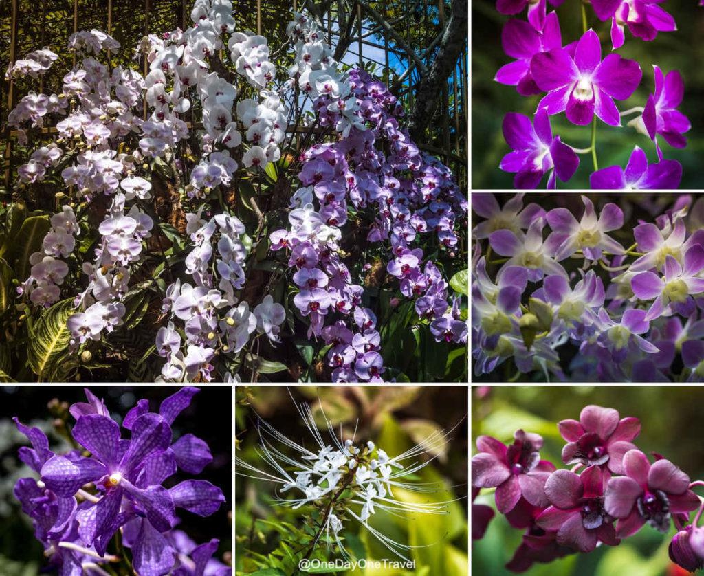 Jardin botanique de Singapour orchidées