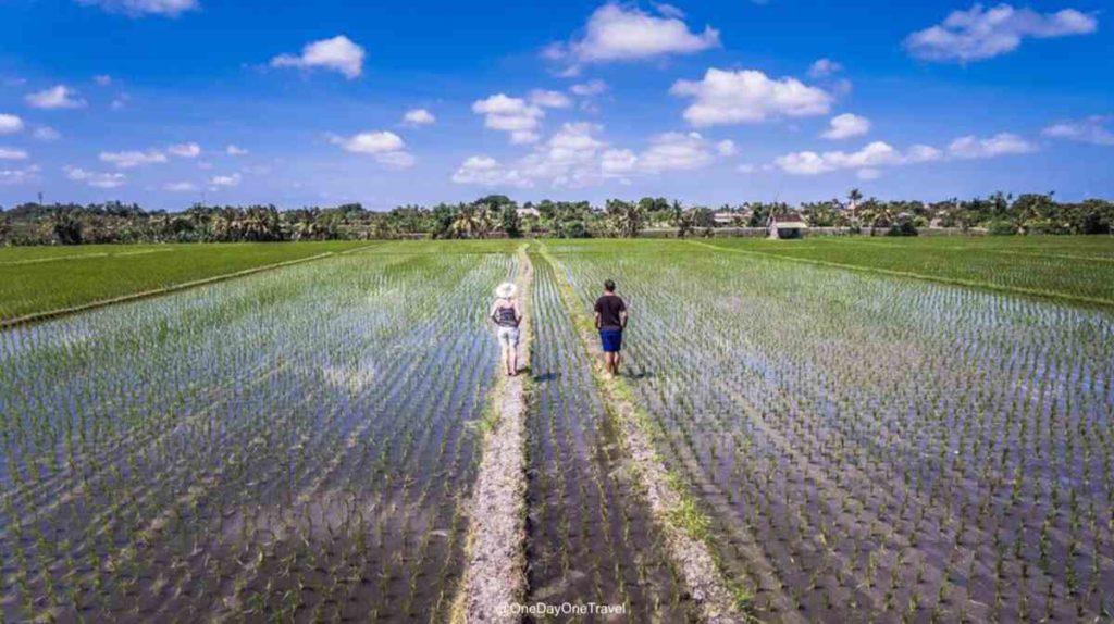 Rizières de Canggu Bali