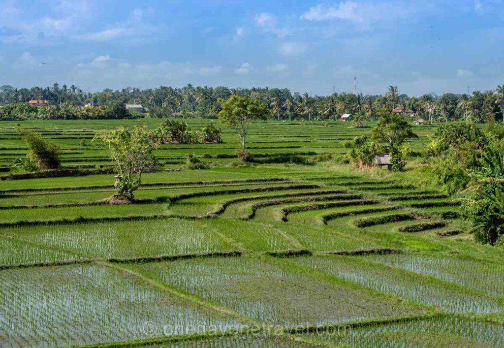 Rizières entre Canggu et Tanah Lot