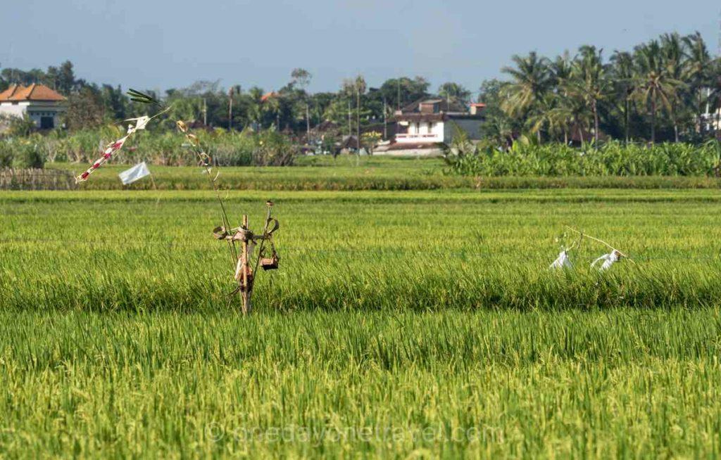 Rizières de Canggu - Sud Bali