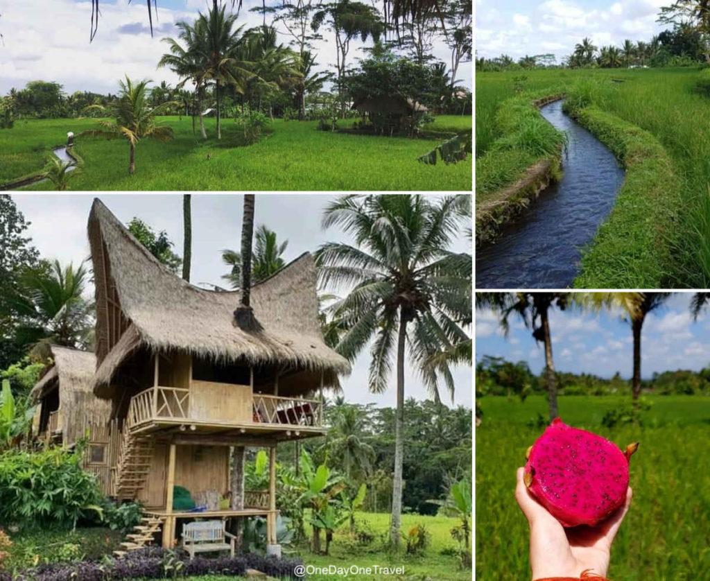 Bamboo Bali Treehouse