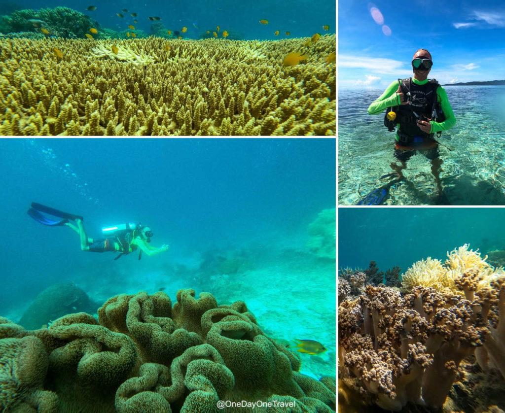 Fonds marins et plongée en bouteille autour de l'île d'Arborek - Voyage Raja Ampat