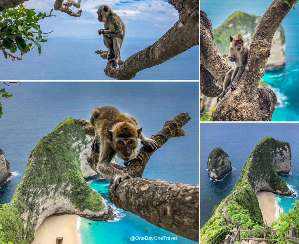 Vue impressionnante sur la plage de Kelingking à Nusa Penida avec ses singes