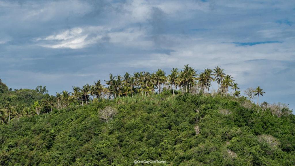 Crête avec cocotiers sur Nusa Penida - Visiter l'Indonésie