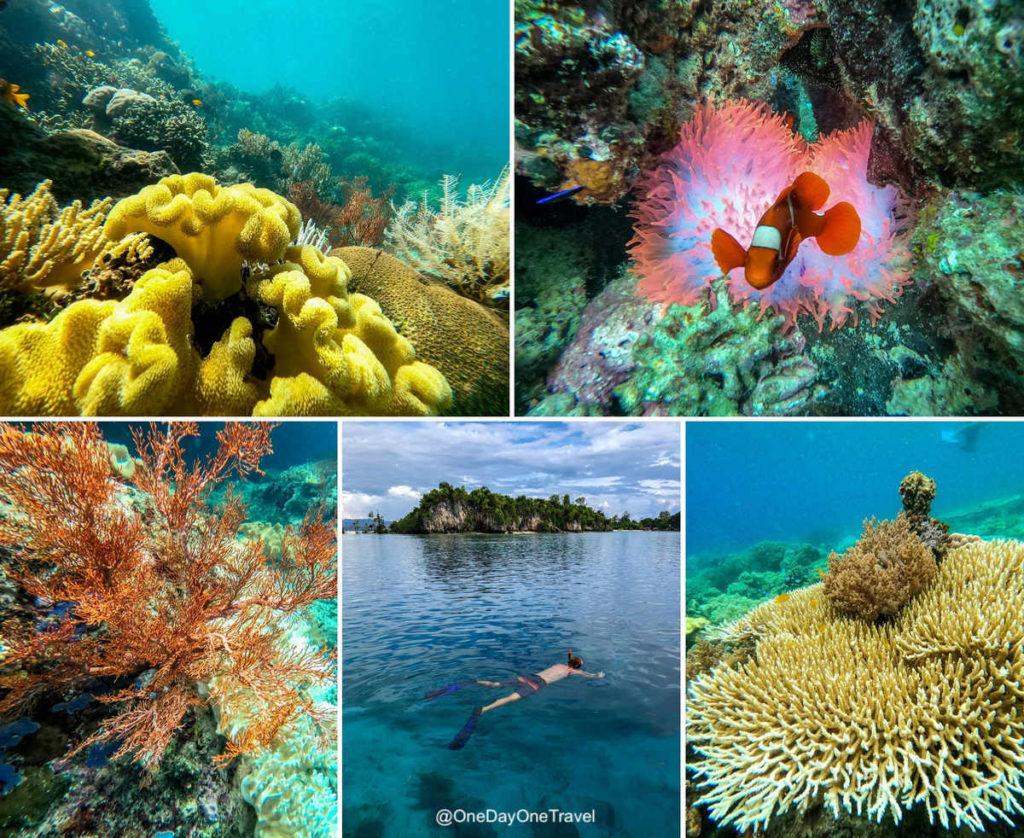 Plongée à Raja Ampat - Conseils site diving blog voyage OneDayOneTravel