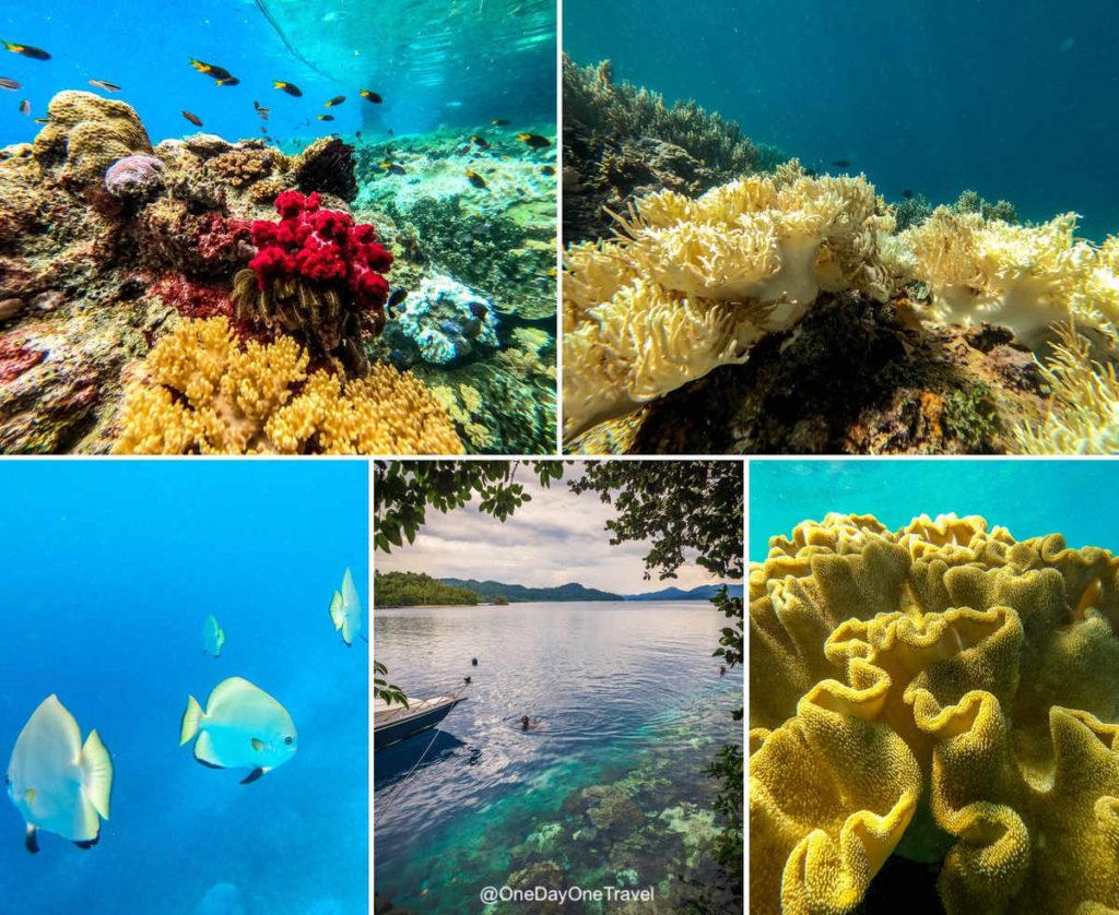 Snorkeling à Raja Ampat - Où plonger ? Conseils blog voyage OneDayOneTravel