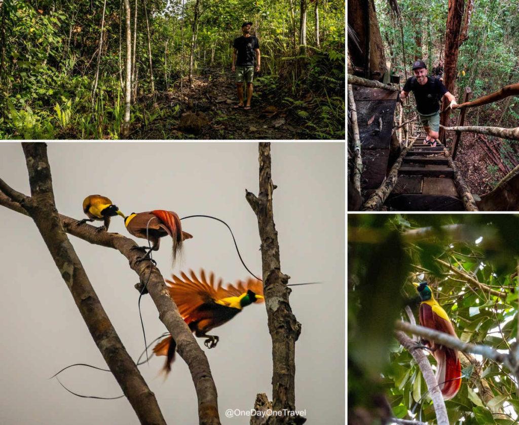 Observer l'oiseau de paradis - Expérience insolite à Raja Ampat