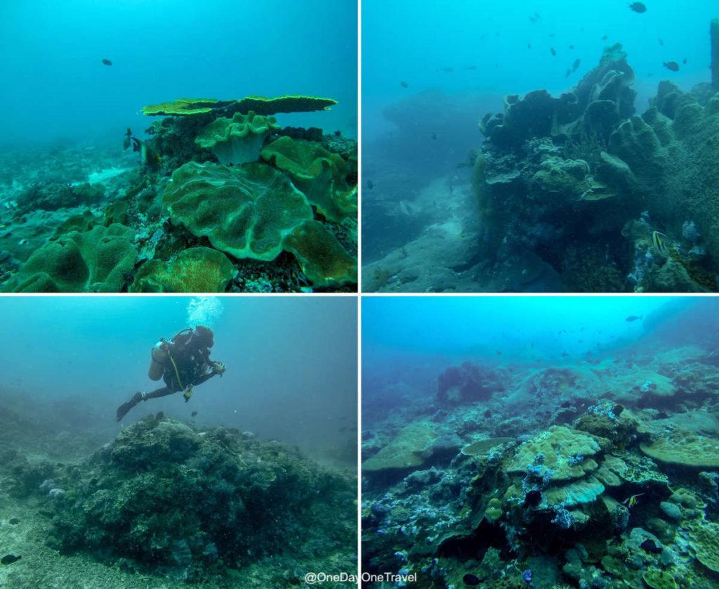 Plonger à Nusa Penida Indonésie - Conseils et récit de voyage - Purple Dive Penida