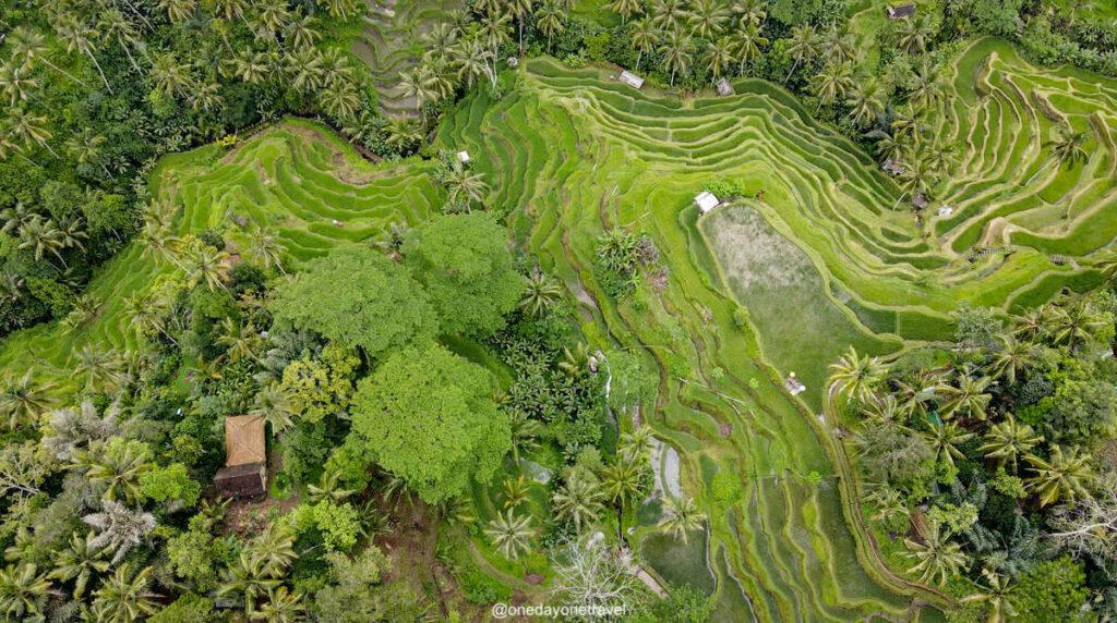 Les rizières de Bali à explorer avec l'agence de voyages locale à Bali : MimpiGO